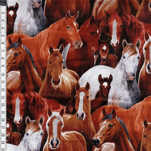 Farm animals - Hest